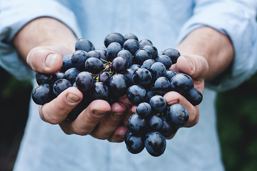 Comercio justo, productos ecológicos y producción responsable