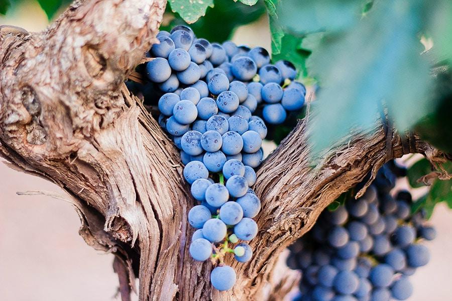 Antioxidantes de temporada